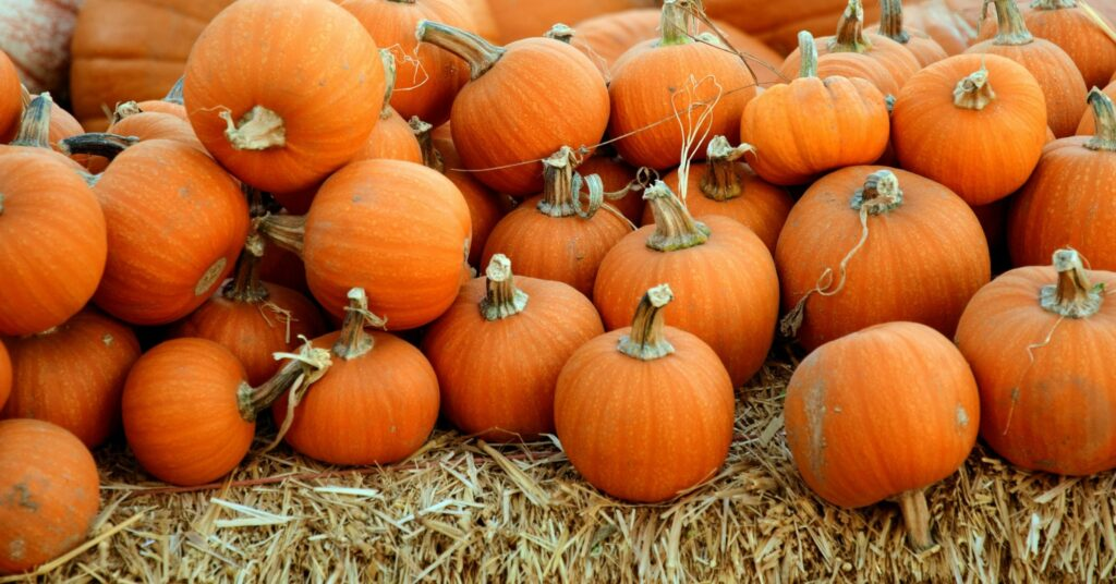A sustainable Halloween - Sustainable Halloween blog cover image