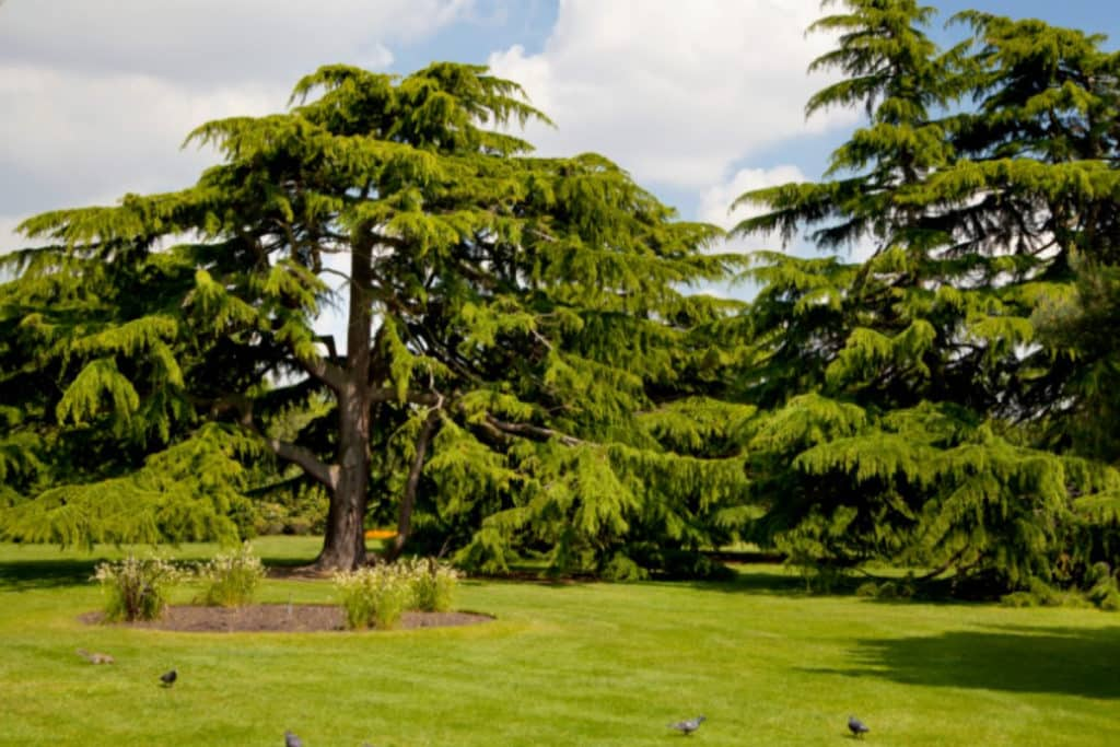 Greenwich   Ethical Brand Directory Blog   Best Parks in London for Outdoor Socialising
